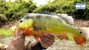 Pescaria Itaibate Argentina