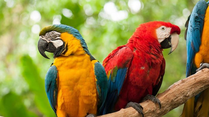 Cataratas + Parque de Aves
